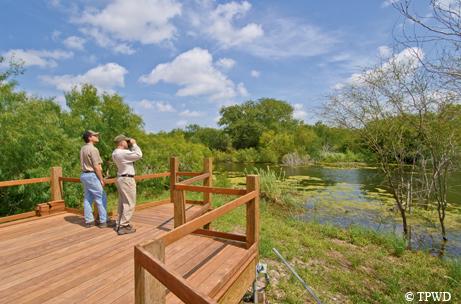 Birding in the Rio Grande Valley