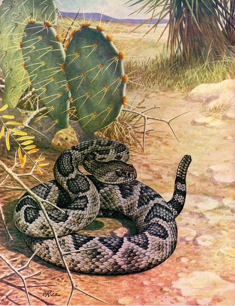 Rattlesnakes make a distinctive sound to let you know they are nearby -- and to stay away.