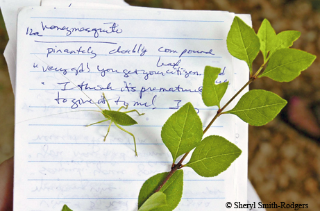 Master naturalist notes, Photo by Sheryl Smith Rodgers