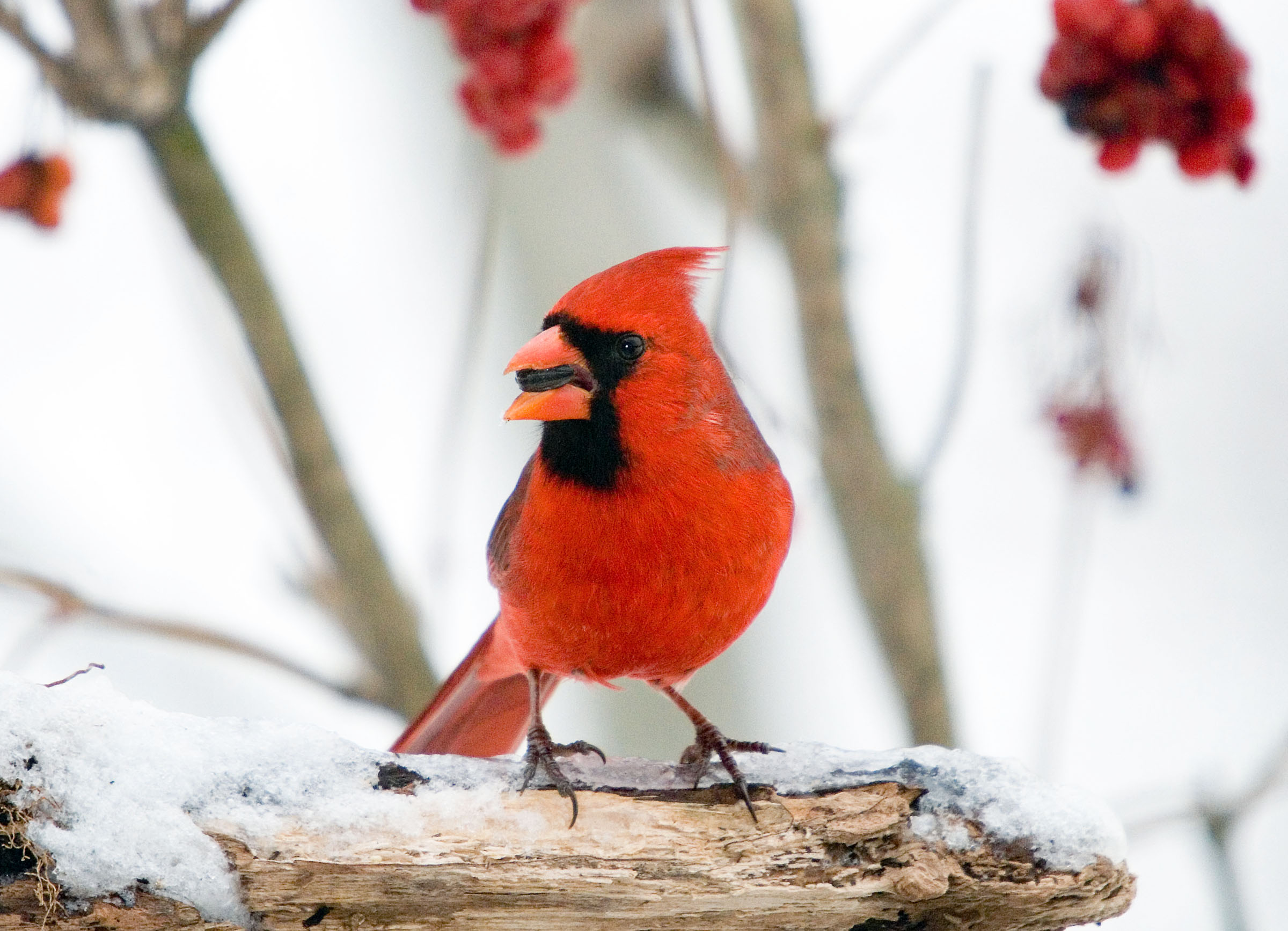 Christmas Bird Count, image Jerry Acton, www.audubon.org