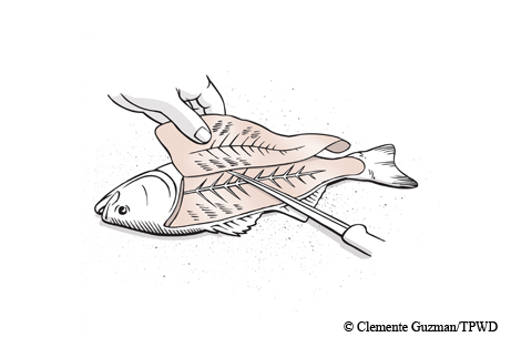 How to filet a fish.