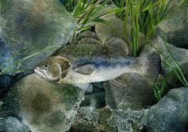 Student Fish Art