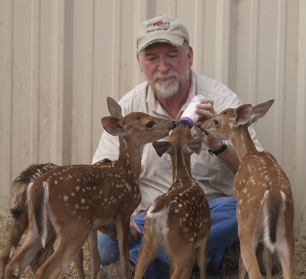 TPWD staff photographer, Earl Nottingham, helps feed fawns