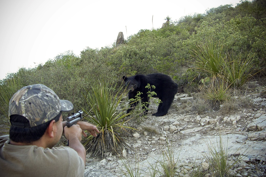 Mexican researcher preparing to shoot tranquilizer at bear. Image courtesy the Government of Mexico.