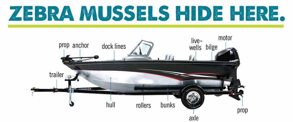 Places where invasive zebra mussels hitch a ride.
