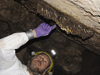 Checking caves for White Nose Syndrome
