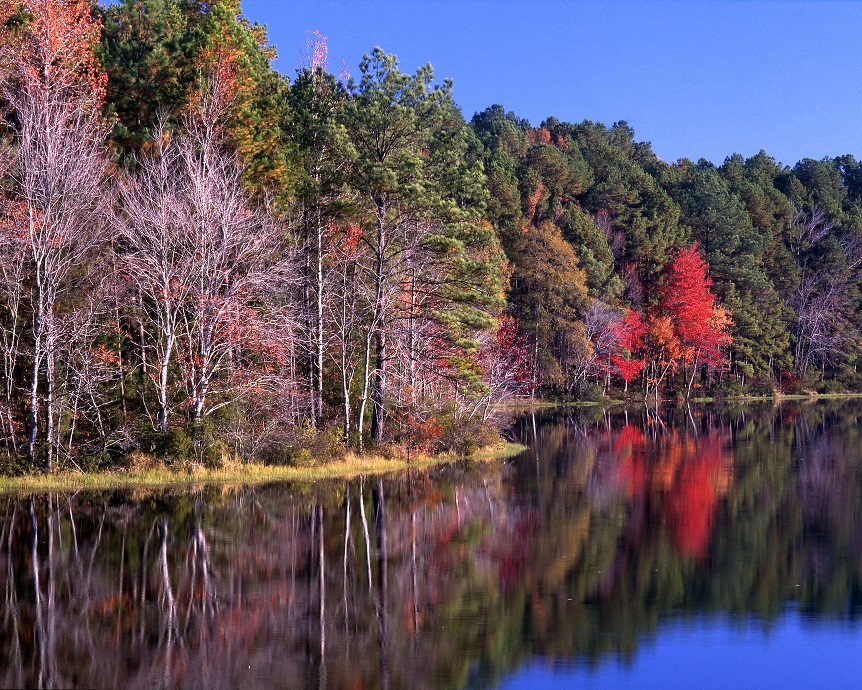 Trees along a lake, changing color for fall.