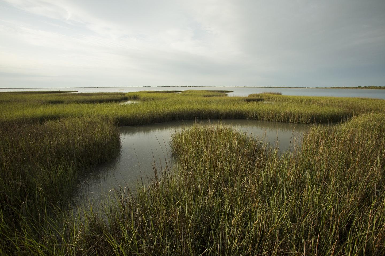Wetland bayous