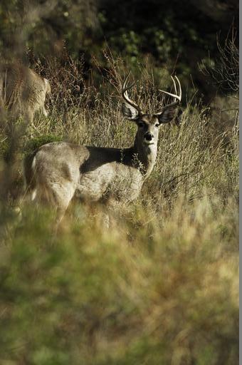 Big antlers on a fine buck.