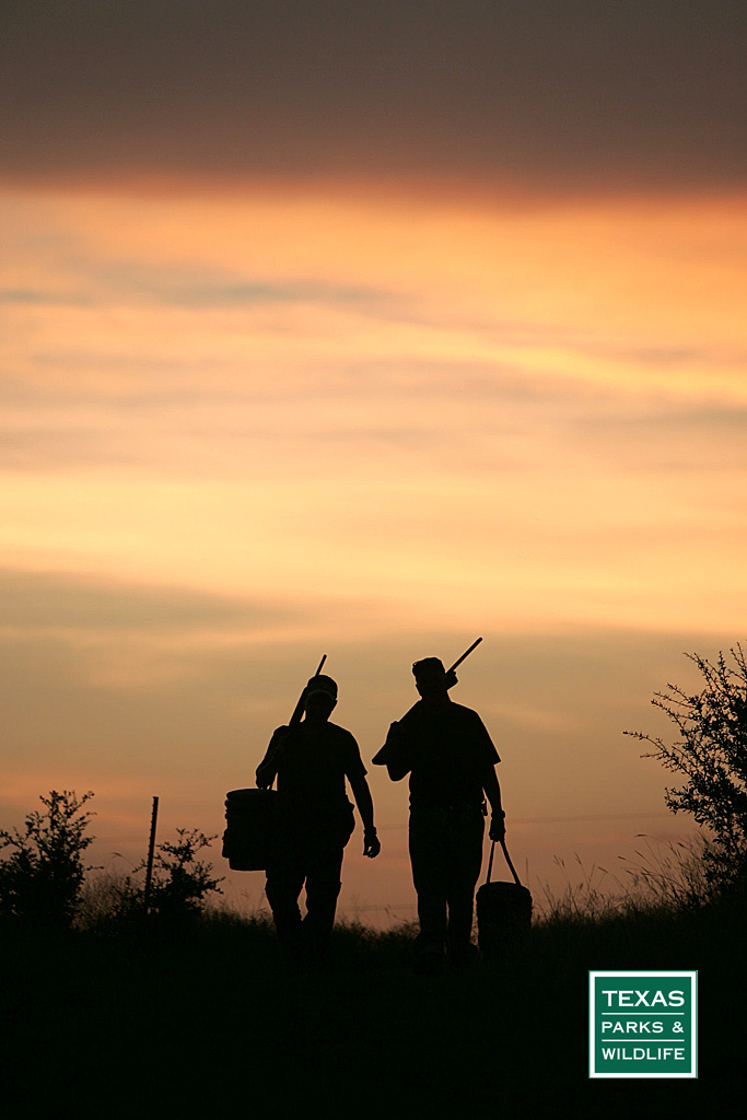Dove hunters at sunset
