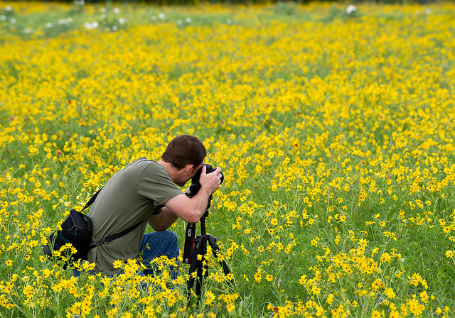 Photographing spring wildflowers.