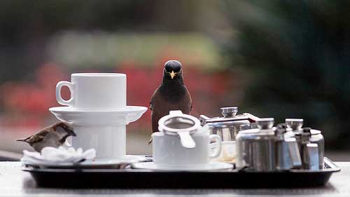 Birds and coffee, image from coffeekrave