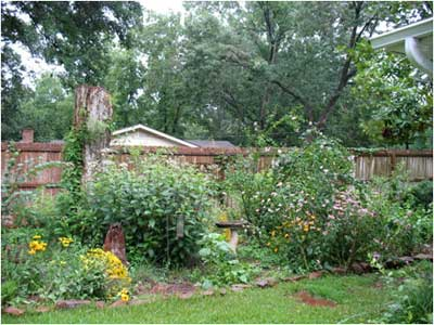 A backyard wildscape with native plants.