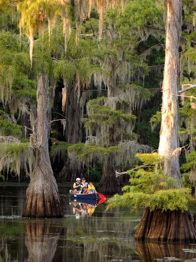 Paddling on Caddo Lake
