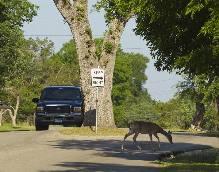 Urban WildlifeMorgans Point, Texas