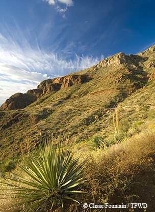 Sotol, yucca and other desert plants cover the hillsides at Mundy's Gap.. Photo Credit: Chase Fountain