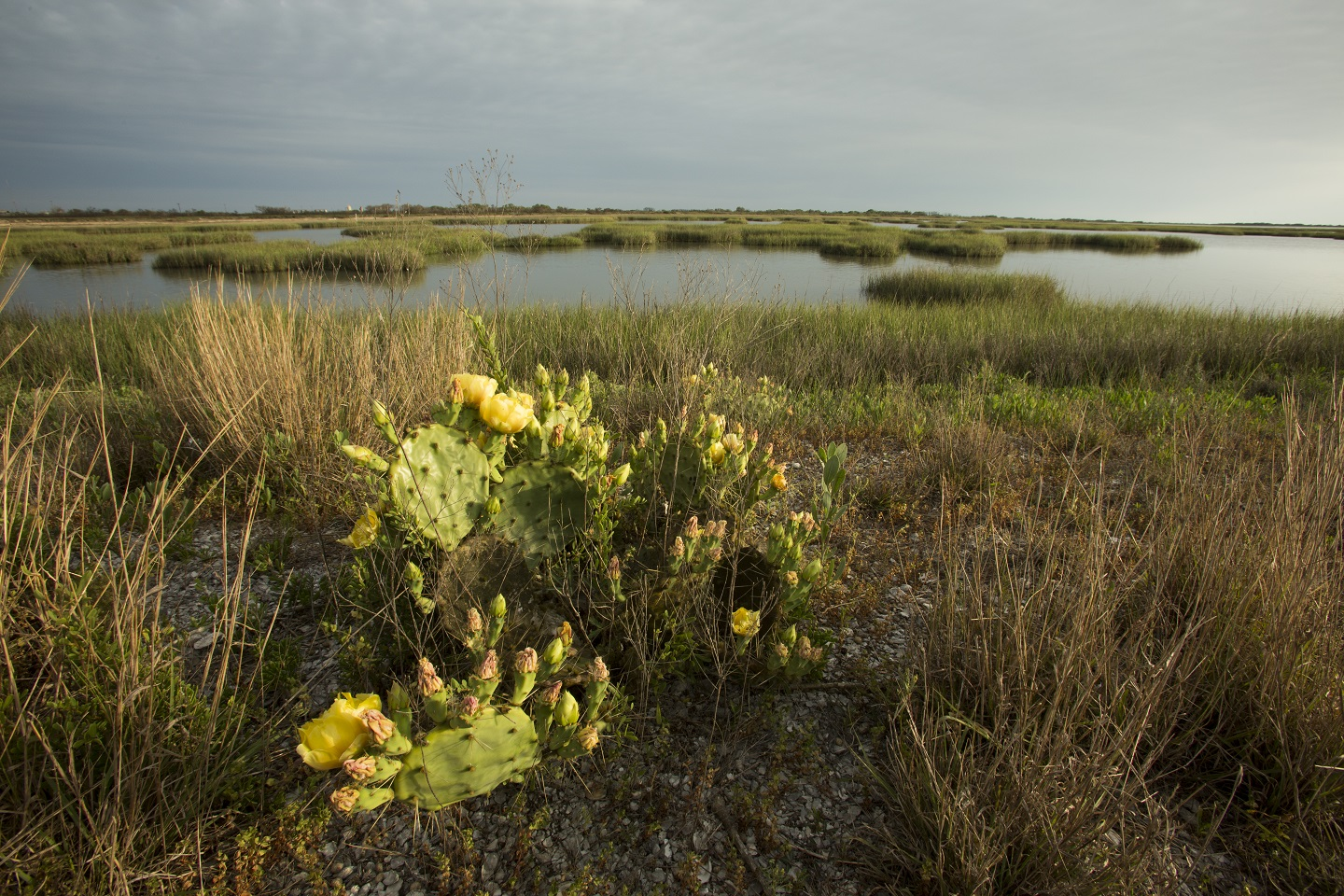 Cactus and wetlands along Powderhorn Lake. Photo courtesy of the nature Conservancy, Jerod Foster
