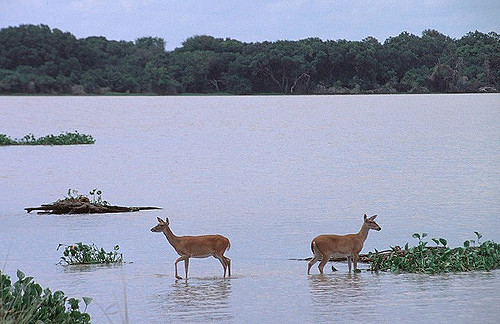 Current residents of Lake Texana.