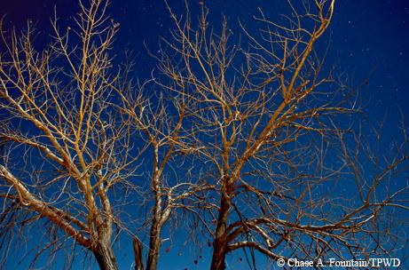 Tree limbs.