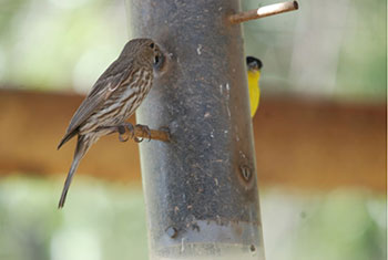 Birds at backyard feeder.