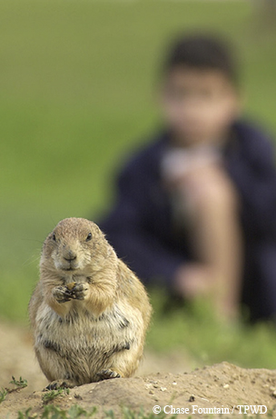 Prairie Dog at Lake Arrowhead State Park, copyright Texas Parks  and Wildlife Dept.