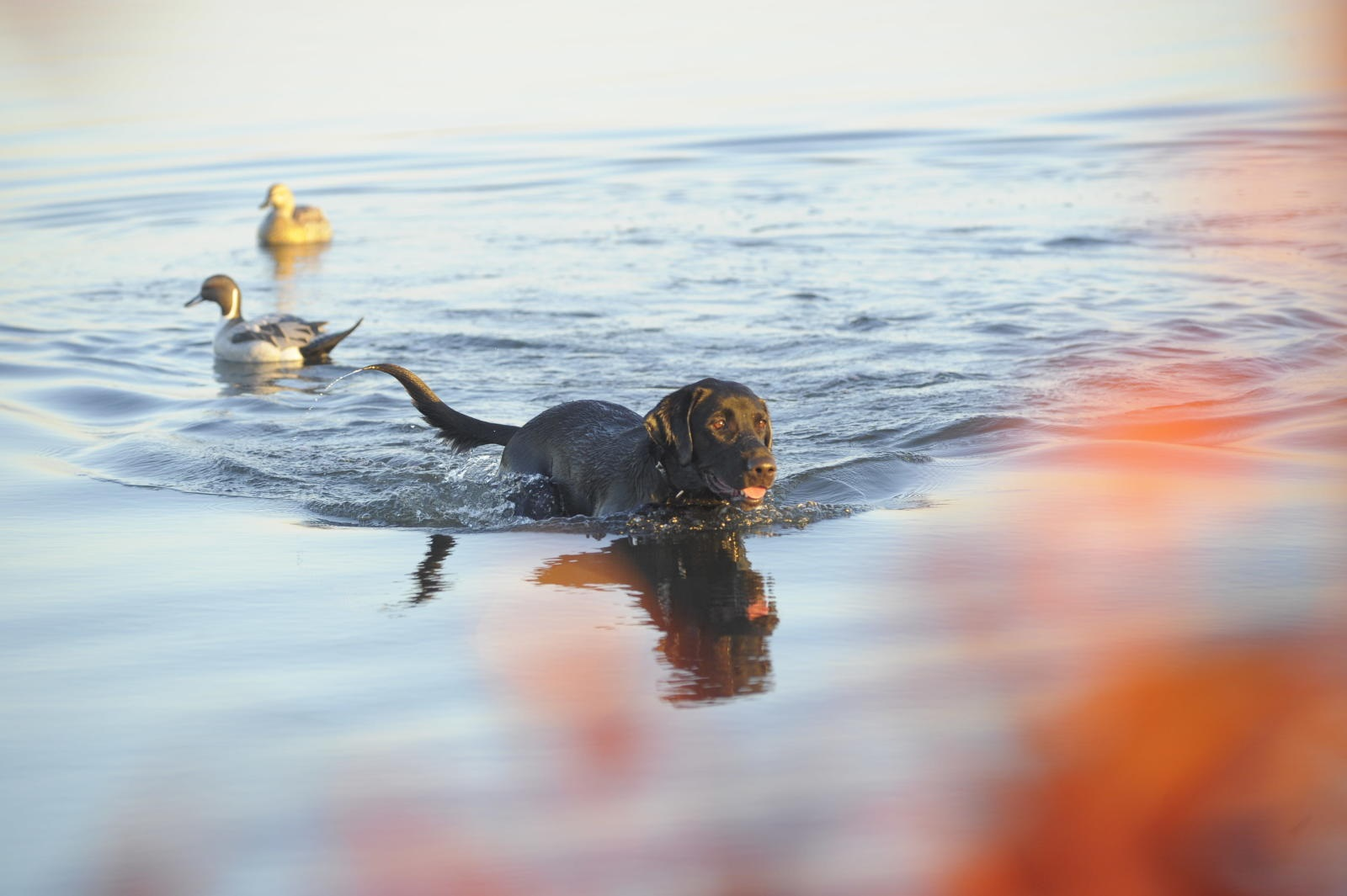 Waterfowl hunting.
