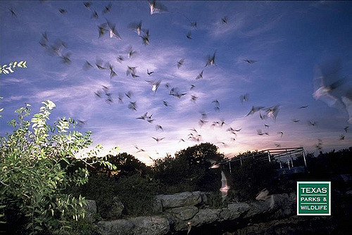 Bats at Devil's Sinkhole State Natural Area.