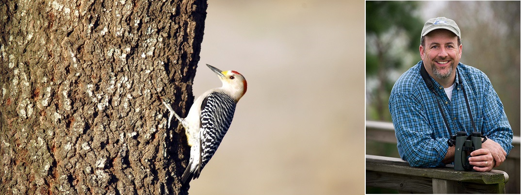 Golden fronted woodpecker, and golden throated ornithologist, Cliff Shackelford
