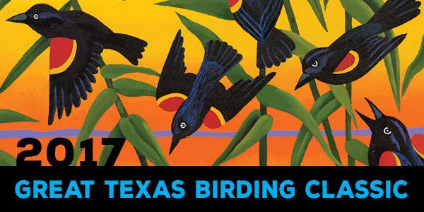 2017 Great Texas Birding Classic, April 15 - May 15.