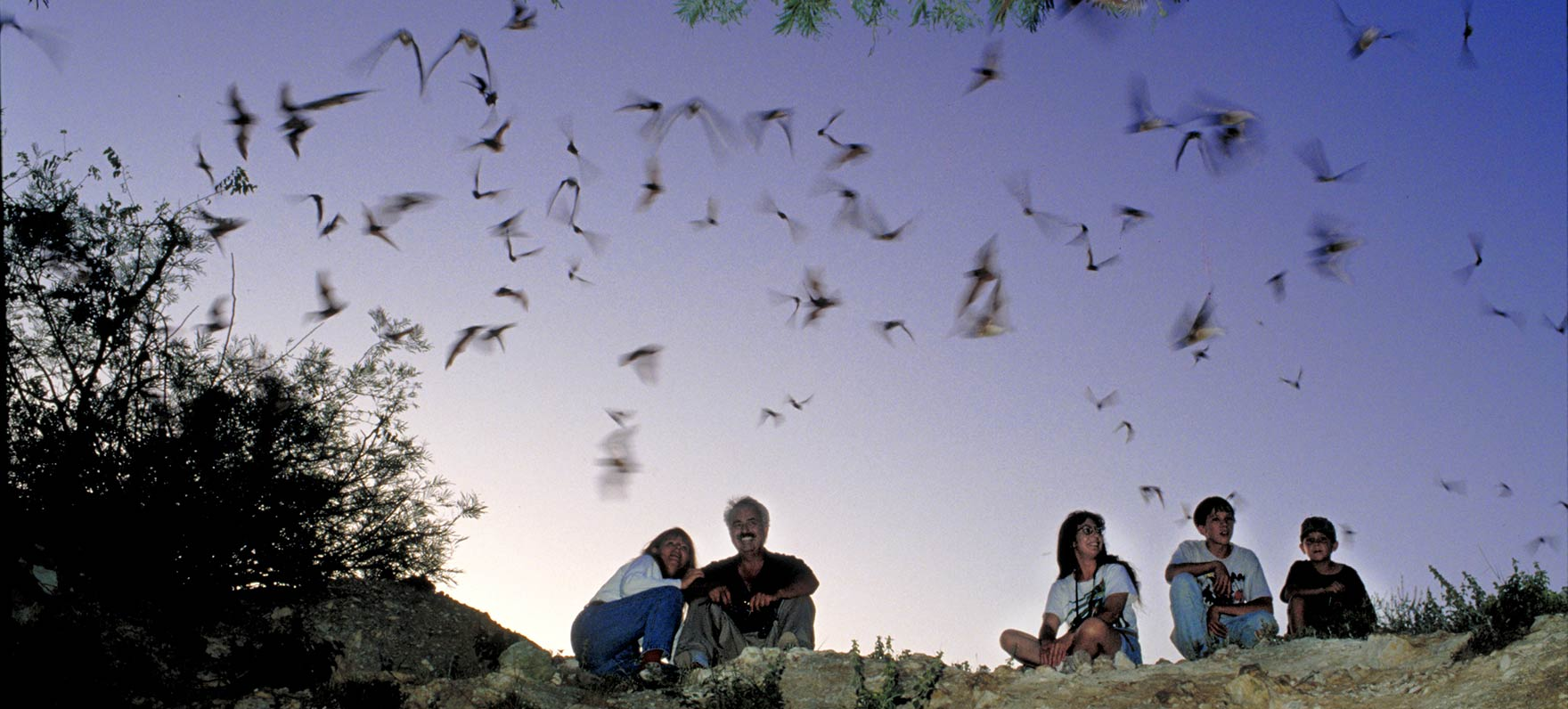 Bats emerge from their roost at Kickapoo Cavern State Park