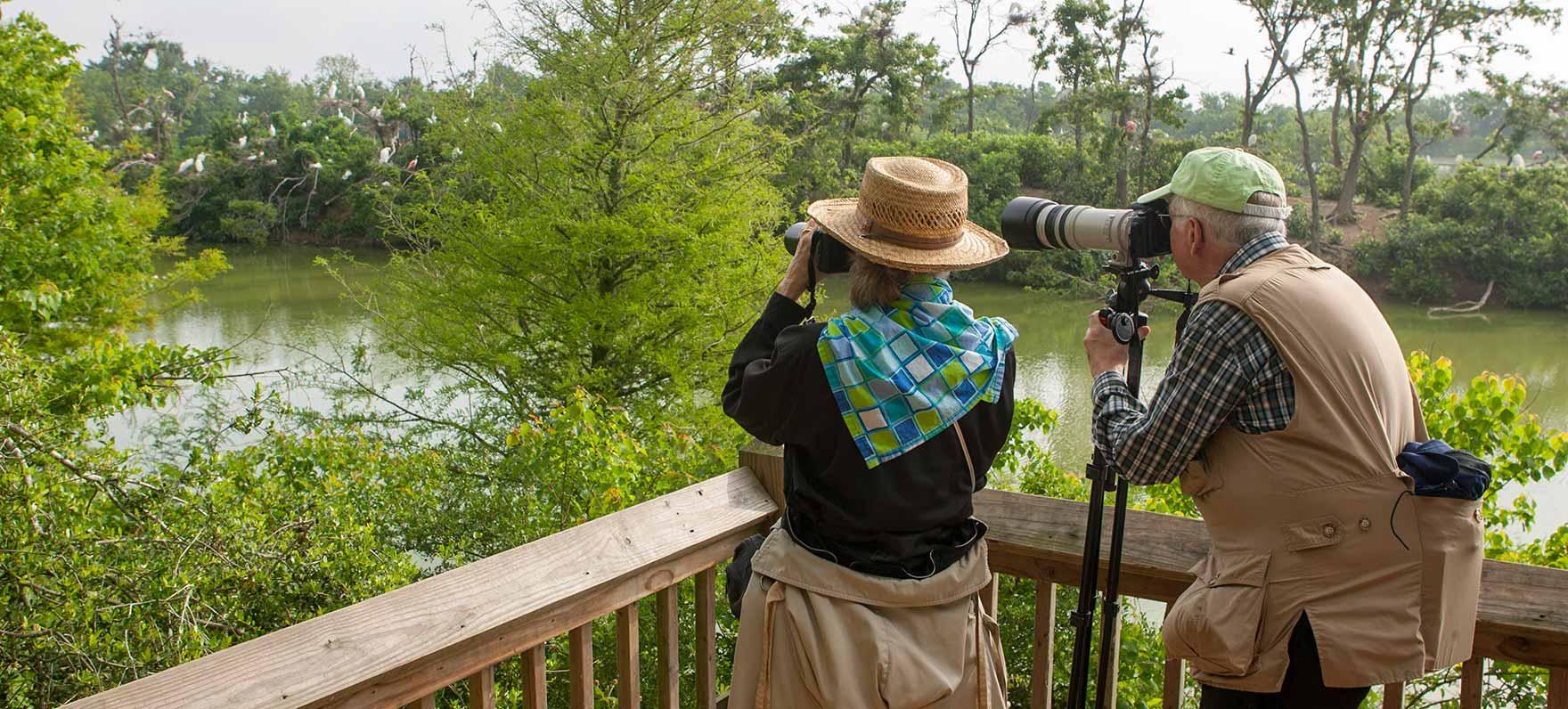 Share your bird sightings on eBird.