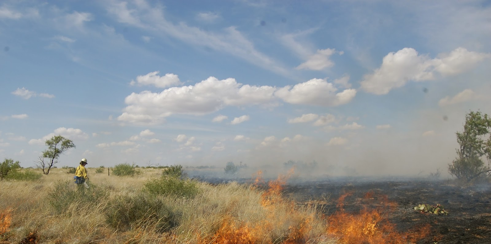 Ignition operations on an RX-burn at the Matador WMA. Image: Verble Fire Ecology Lab.