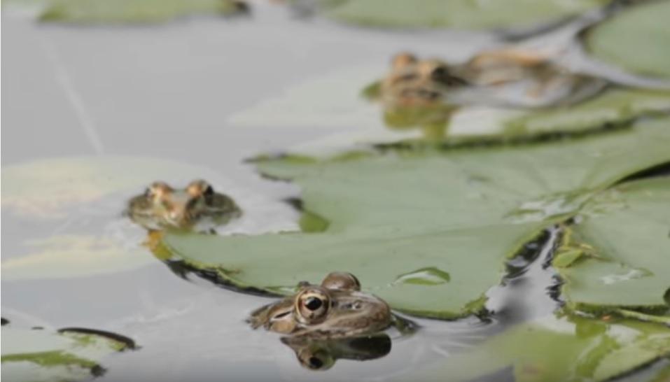 Don Cash's frog pond.