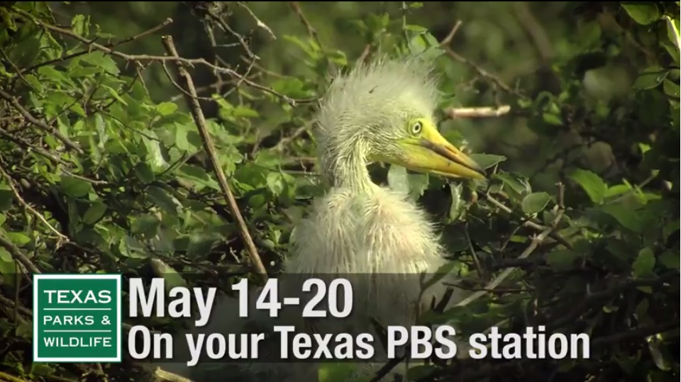 Birds and Birders segment coming up on Texas parks and Wildlife TV series on PBS.