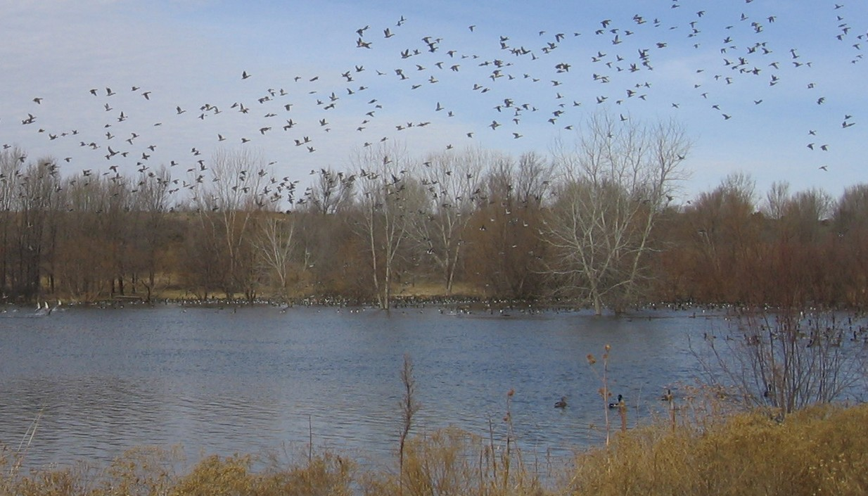 Playa lakes attract waterfowl.