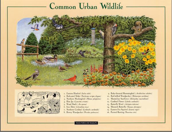 Commonly found urban wildlife.