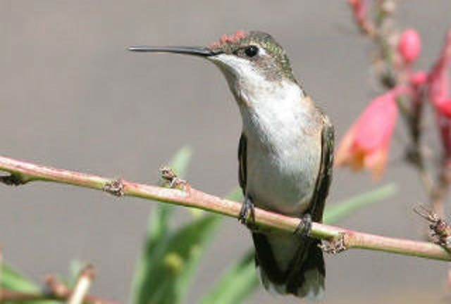 Hummingbirds are adaptable.