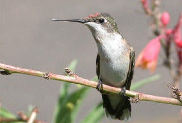 Hummingbirds are adaptable.