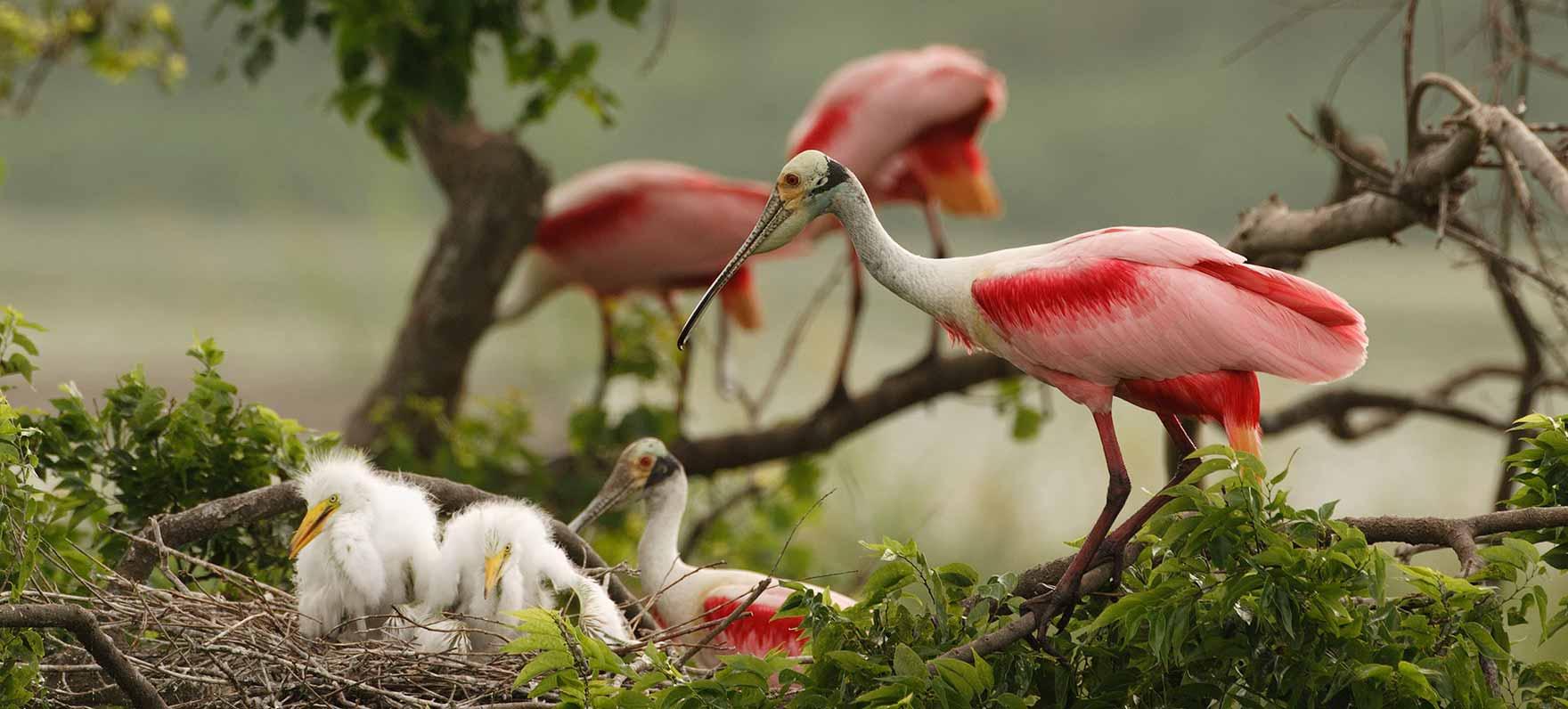 birding-classic-2008