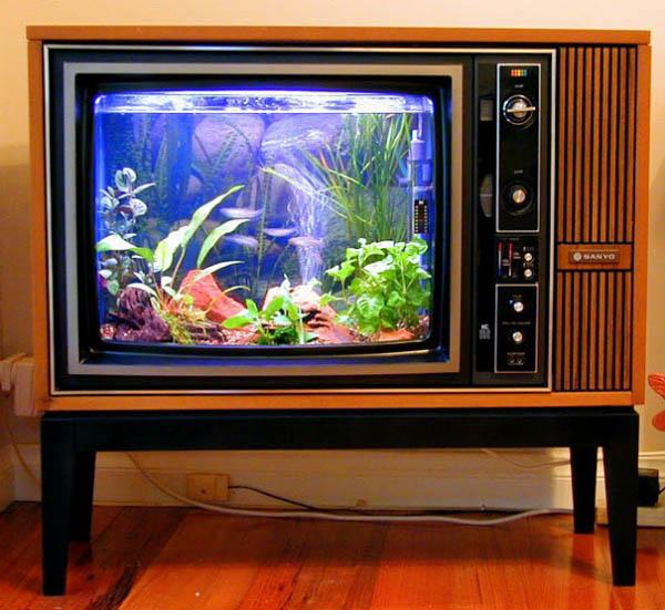 tv-aquarium-furnish-burnish