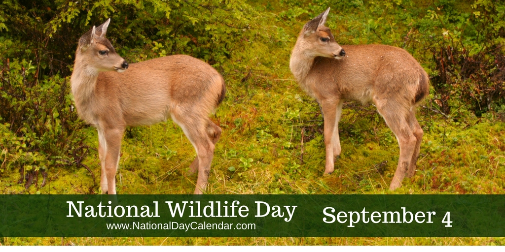 National-Wildlife-Day-September-4-1