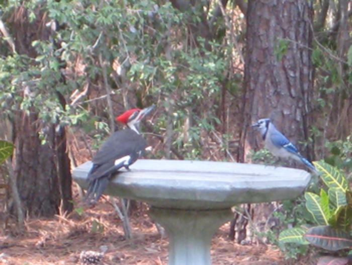 birdbath_c_steffan_med