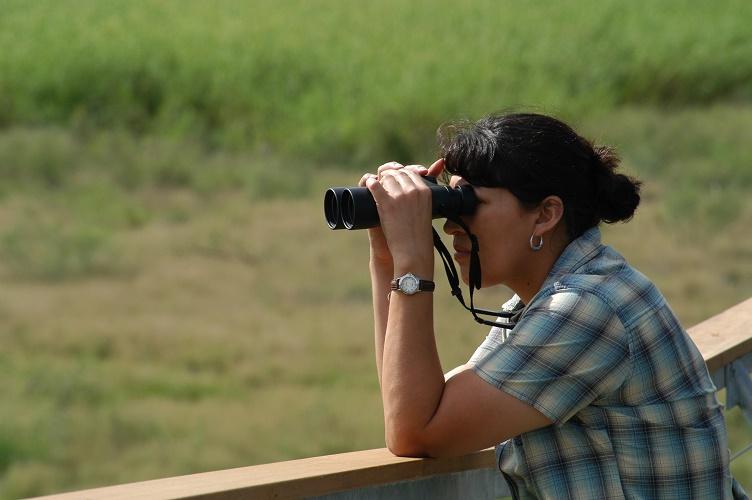 Hawk Tower Bird Watching.