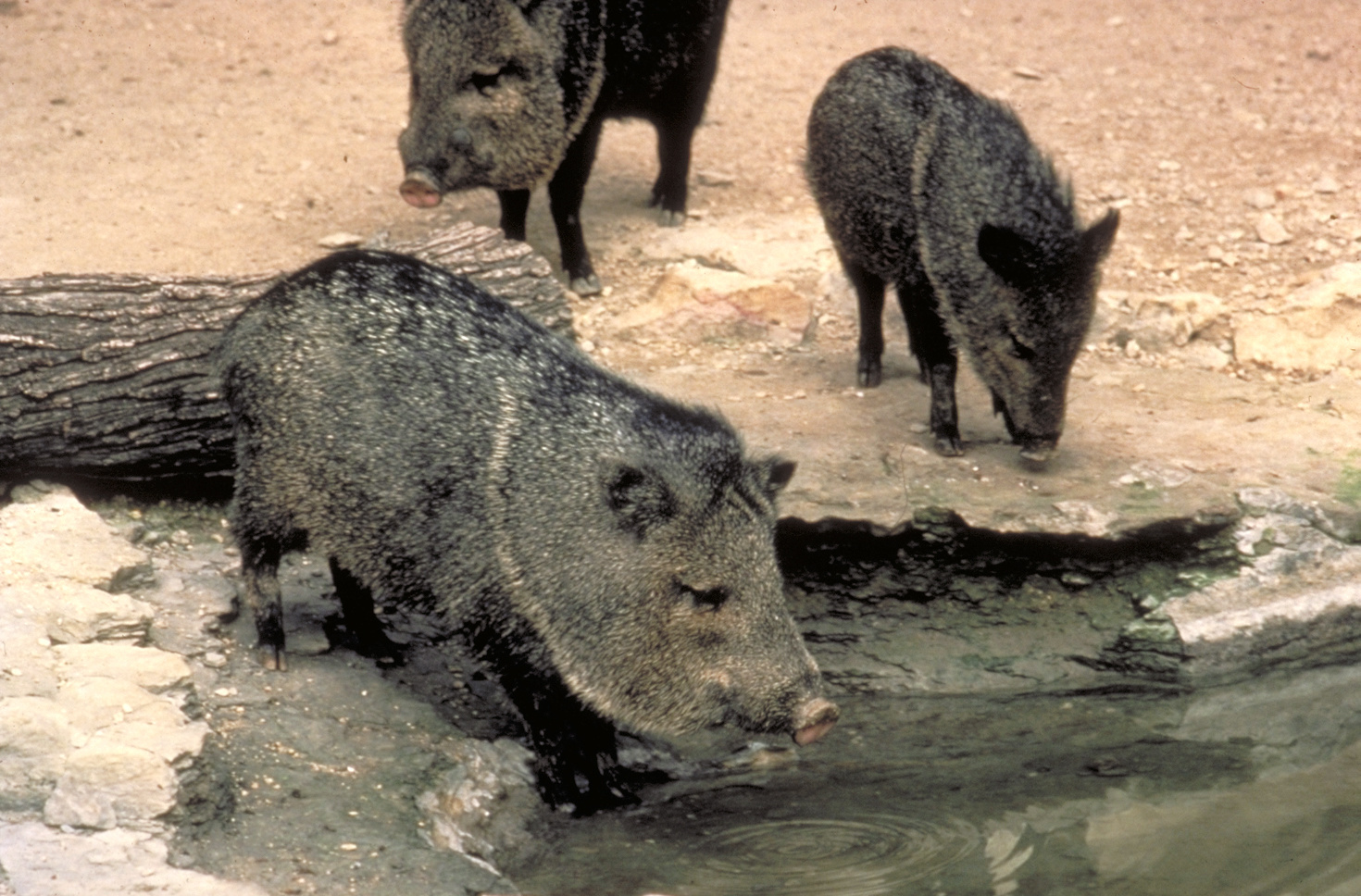 Javelina Happy Hour